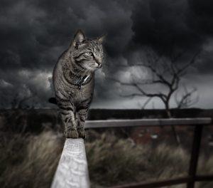 macska negatív energia