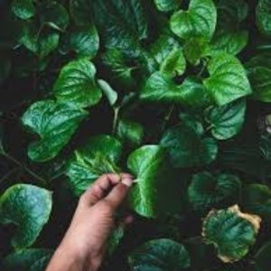 kertészkedés titkok szakember
